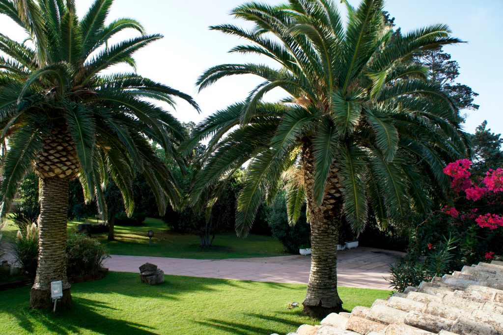 part of the garden with trees and palms over thirty years old